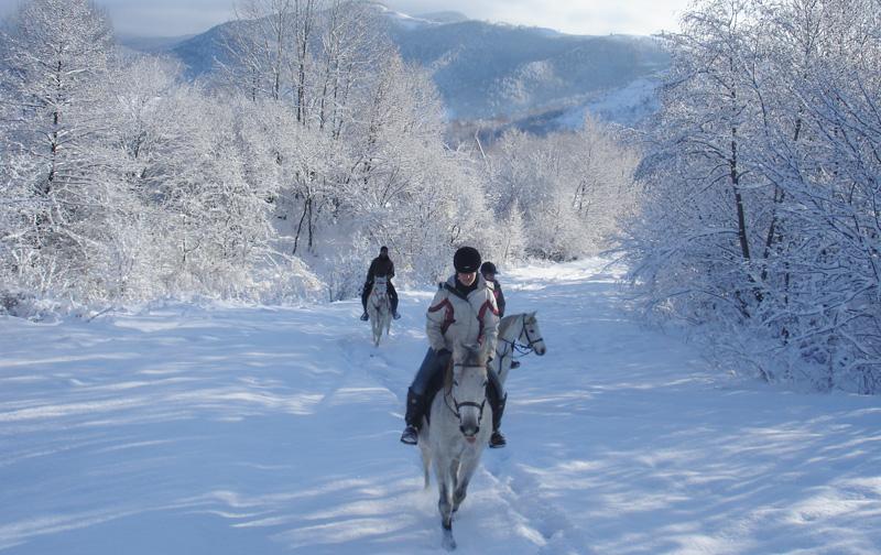 Horse riding Transylvania Romania